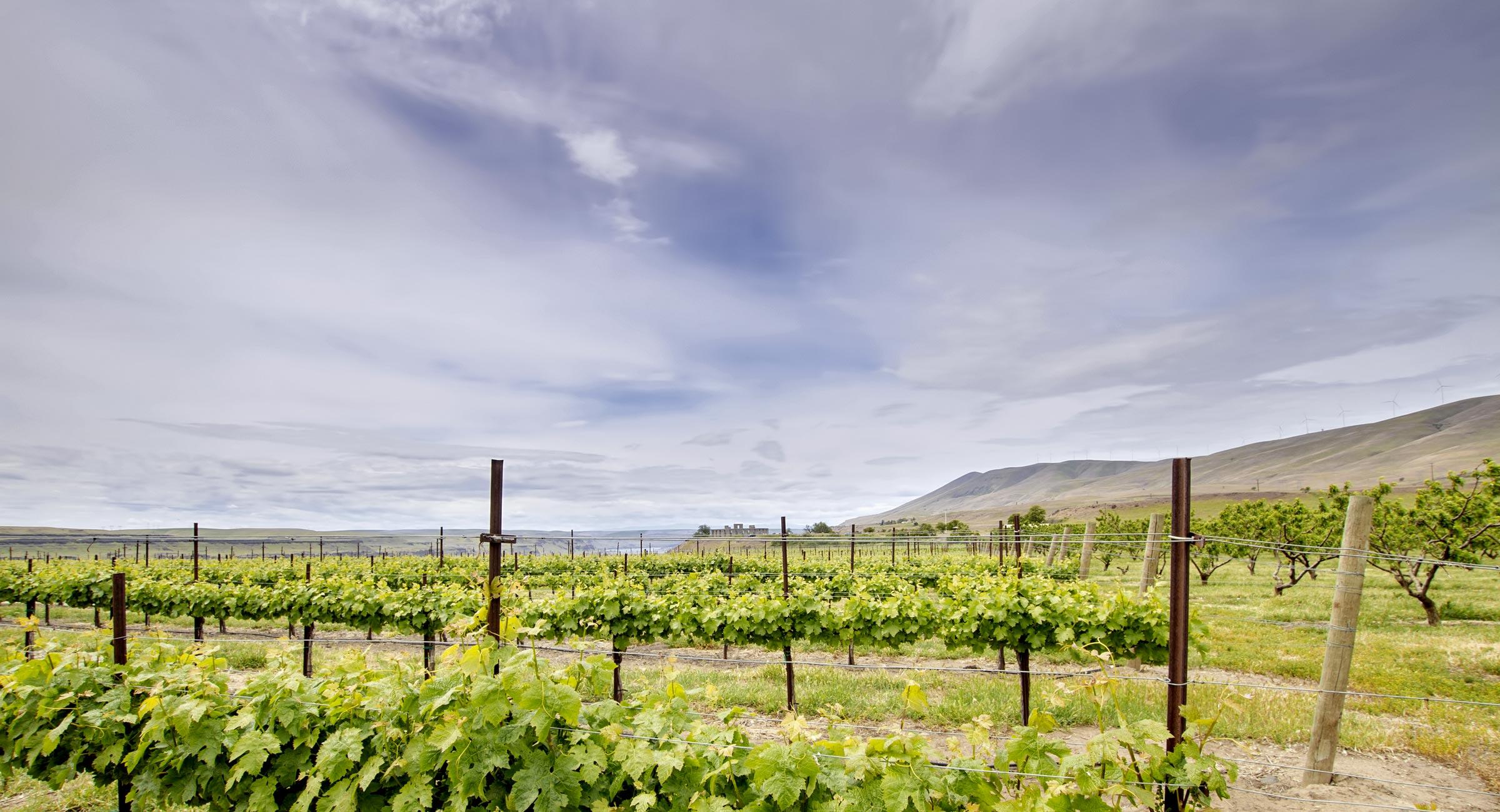vineyard_columbia